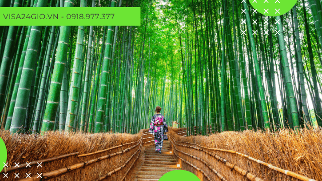 Một phần vẻ đẹp của rừng tre Sagano Nhật Bản