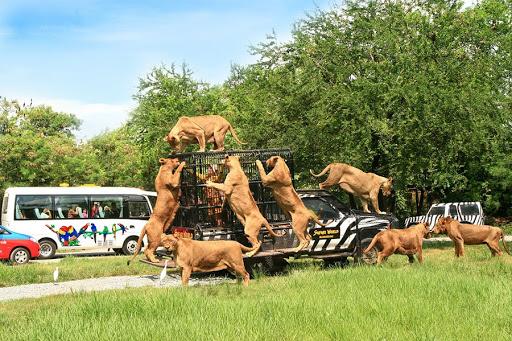 FLC Zoo là địa điểm lý tưởng cho du khách yêu thích động vật.