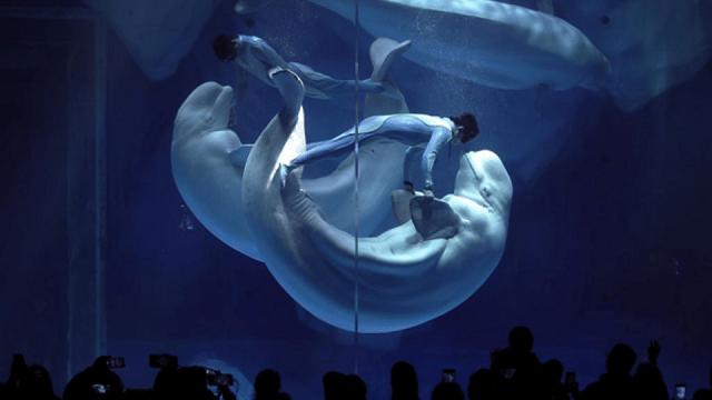 """Màn trình diễn truyền kỳ đầy ảo mộng """"Heart of the Sea"""""""