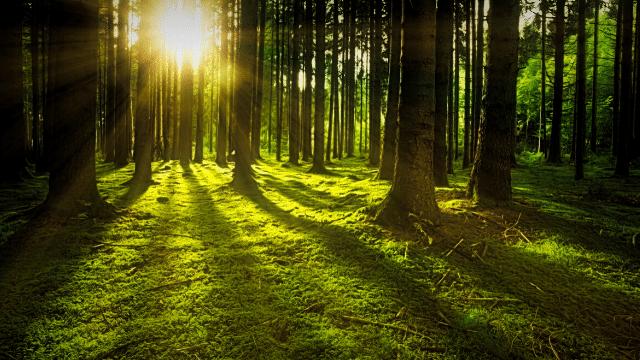 có một một khu rừng đủ điều kiện để du khách có thể cắm trại hoặc nghỉ ngơi qua đêm.
