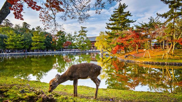 Nét đặc sắc của Nara khi du lịch Nhật Bản mùa xuân