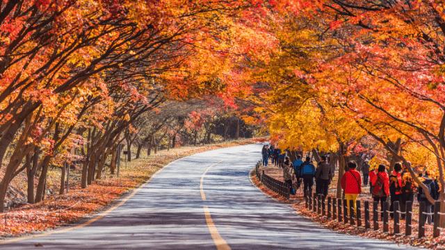Đi tour du lịch Hàn Quốc vào mùa thu