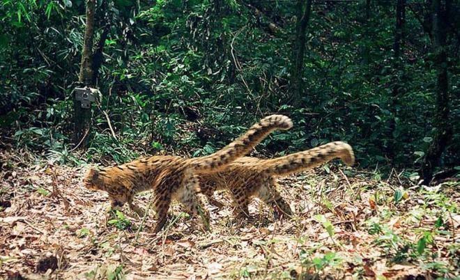 Khu bảo tồn sinh học Quốc gia Nam Et Phou Louey (Ảnh: ST)